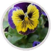 Viola Tricolor Heartsease Round Beach Towel