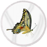 104 Perched Swallowtail Butterfly Round Beach Towel by Amy Kirkpatrick
