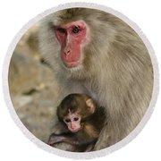Snow Monkeys, Japan Round Beach Towel