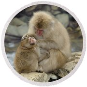 Snow Monkeys Round Beach Towel