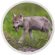 Timber Wolf Pup Round Beach Towel