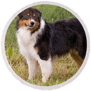 Australian Shepherd Dog Round Beach Towel