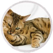 Bengal Brown Spotted Tabby Round Beach Towel