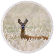 120425p012 Round Beach Towel