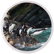 Macaroni Penguin Round Beach Towel