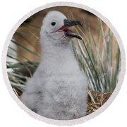 Black-browed Albatross Round Beach Towel