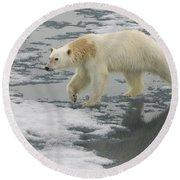 Polar Bear Walking On Ice Round Beach Towel