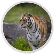 Siberian Tiger, China Round Beach Towel