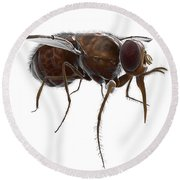 Tsetse Fly Round Beach Towel