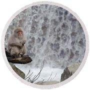 Snow Monkeys Round Beach Towel