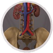 The Renal System Round Beach Towel