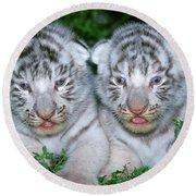 Tigre Blanc Panthera Tigris Round Beach Towel