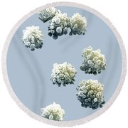 Lymphocytes Undergoing Apoptosis Round Beach Towel