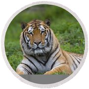 Siberian Tiger, China Round Beach Towel