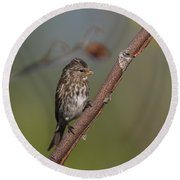 Common Redpoll Round Beach Towel