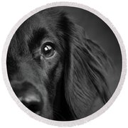 Portrait Of A Mixed Dog Round Beach Towel