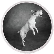 Portrait Of A Jack Russell Terrier Dog Round Beach Towel