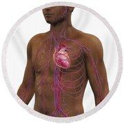 The Cardiovascular System Round Beach Towel
