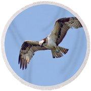 Birds Of The World Round Beach Towel
