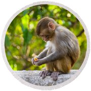 A Baby Macaque Eating An Orange Round Beach Towel