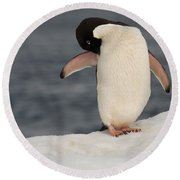 Adelie Penguin Round Beach Towel