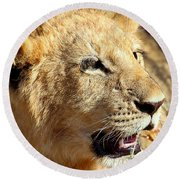 African Lion Cub Portrait Round Beach Towel