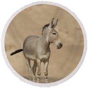 African Wild Ass Equus Africanus Round Beach Towel