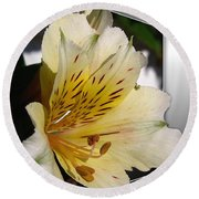 Alstroemeria Named Marilene Staprilene Round Beach Towel