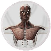 Anatomy Of Male Muscular System, Side Round Beach Towel