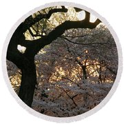 Angry Trees At Sunset Round Beach Towel