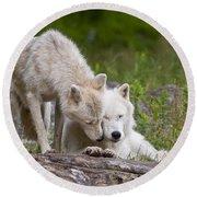 Arctic Wolves Round Beach Towel