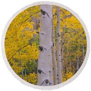Aspen Trees In A Forest, Telluride, San Round Beach Towel