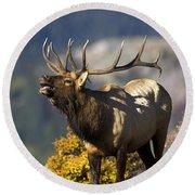 Autumn Bull Elk Bugling Round Beach Towel