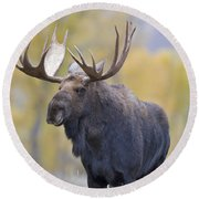 Autumn Bull Moose IIi Round Beach Towel
