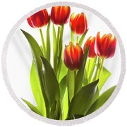 Backlit Tulip Flowers Against White Round Beach Towel