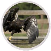 Bald Eagle In Flight Photo Round Beach Towel