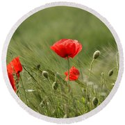 Beautiful Poppies 4 Round Beach Towel