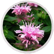 Bee Balm Named Panorama Pink Round Beach Towel