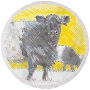 Belted Galloway Cows Round Beach Towel