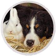Bernese Mountain Puppy And Rabbit Round Beach Towel