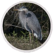 Birds Of The Lowcountry Round Beach Towel