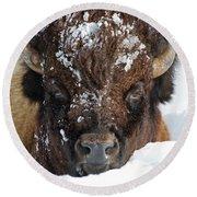 Bison In Snow Round Beach Towel