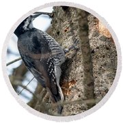 Black-backed Woodpecker Round Beach Towel