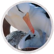 Black-browed Albatross With Chick Round Beach Towel by Art Wolfe