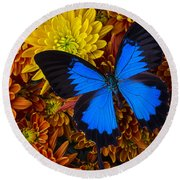 Blue Butterfly On Mums Round Beach Towel