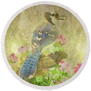 Blue Jay With Texture Round Beach Towel