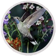 Blue-throated Hummingbird Round Beach Towel