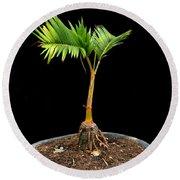 Bonsai Palm Tree Round Beach Towel