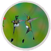 Booted Racket-tail Hummingbird Males Round Beach Towel