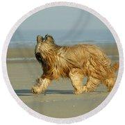 Briard Dog Round Beach Towel